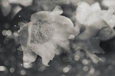 flower730-3