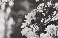 flower759-3