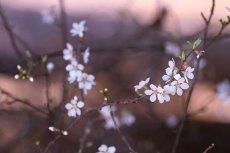 flower778