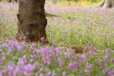 flower783-2