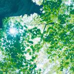 【高解像度】新緑から差し込む光(3パターン)