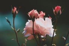 flower804