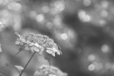 flower822-3