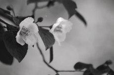 flower824-3