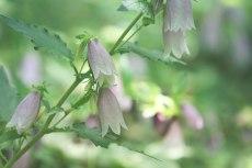 flower827-2