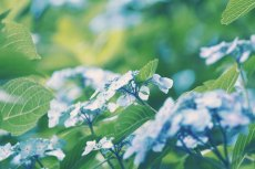 flower832-2