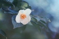flower848-2