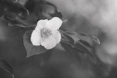 flower848-3