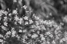 flower860-3
