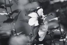 flower873-3