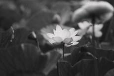 flower879-3