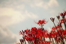 flower892-2
