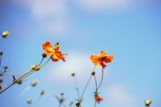 flower895