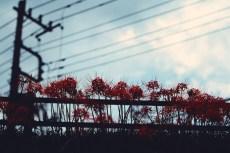 flower903