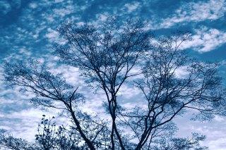 【高解像度】枯れ木と空(3パターン)