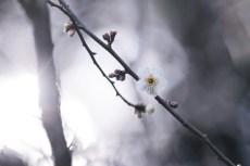 flower926