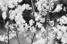 flower945-3