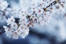 flower965