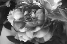 flower991-3