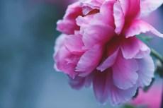 flower998