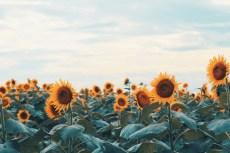flower1029-2