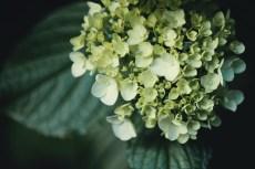 flower1030-2