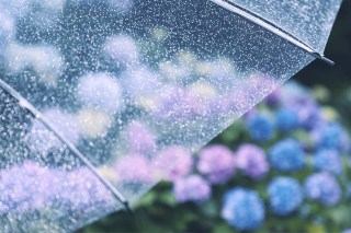 【高解像度】雨と紫陽花(アジサイ)(3パターン)