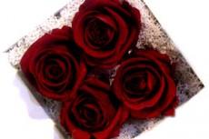 flower041