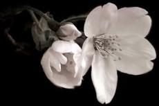 flower065
