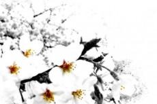 flower069