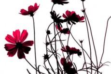 flower149