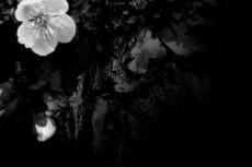flower194