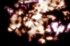 flower075