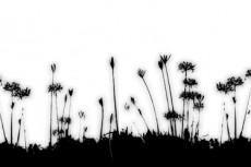 repeat-flower029_4