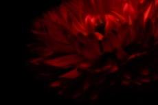 flower288