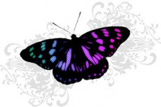 norepeat-butterfly010_2