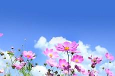 flower315