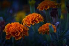 flower359
