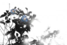flower277_2