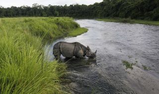 One horned rhino seen at Chitwan National Park Nepal