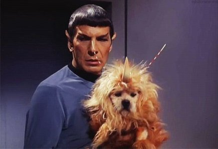 Stella the Star Trek Dog on Twitter