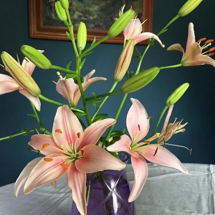 Fresh from the garden 1897farmhouse lillies gardening flowers nofilter