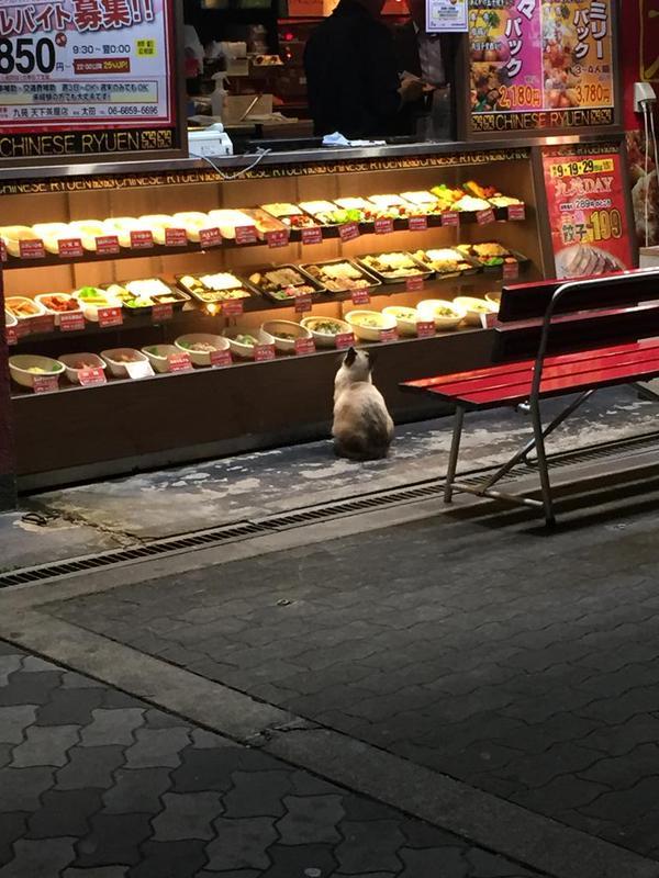 「猫が弁当頼んでる!」 大阪の中華料理店で決定的な瞬間が撮られる