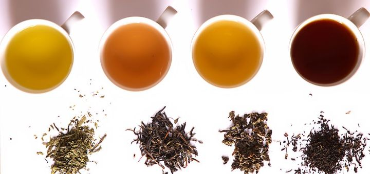 1024px-Tea_in_different_grade_of_fermentation