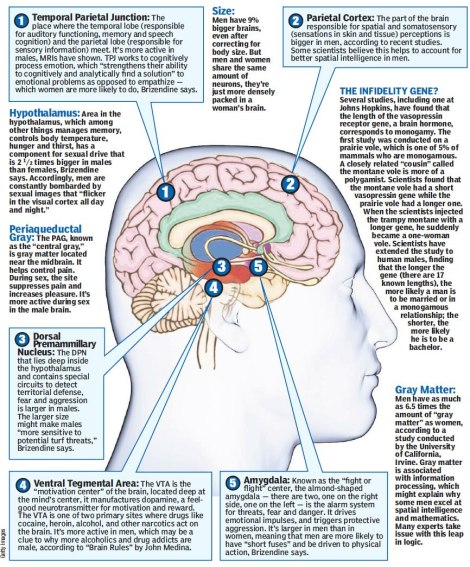 Female Brain. Photo source: New York Post
