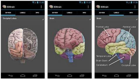 Best Free Android Neuroscience Apps - NeuroRelay