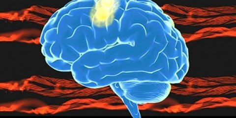 motor-cortex-brain-image