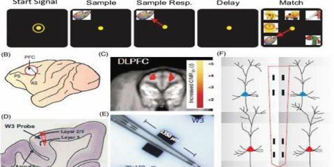 neuroprosthetic-experiment-wake-usc-berger