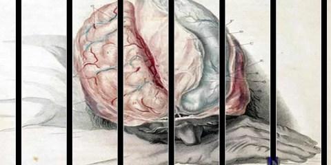 psychopath-brain-research