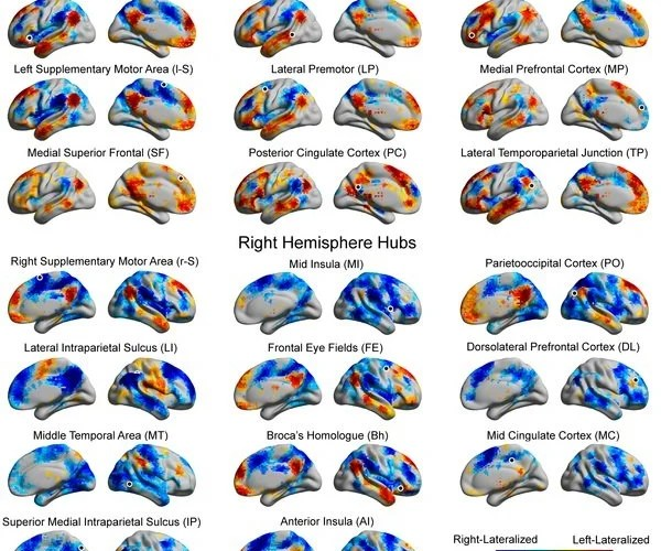The image shows the hemispheric lateralization maps for the hubs of the brain. The caption best describes the image.